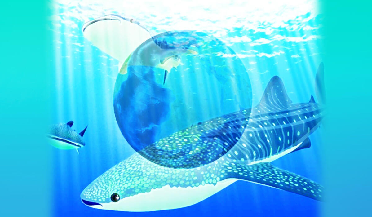 世界の水族館 ジンベエザメ