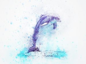 イルカショーのイルカ